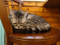 Cats of Cat's Buddy Cafe, #4735