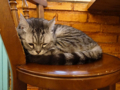 Cats of Cat's Buddy Cafe, #4736