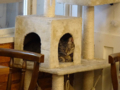 Cats of Cat's Buddy Cafe, #4741