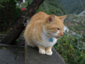 Cats of Houtong, #6770