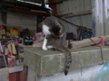 Cats of Houtong, #6800