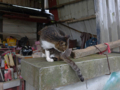 Cats of Houtong, #6801