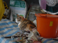 Cats of Houtong, #6804