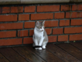 Cats of Houtong, #6808