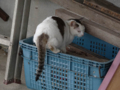 Cats of Houtong, #6925