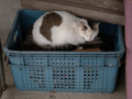 Cats of Houtong, #6927