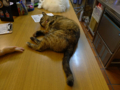 Cats of Houtong, 花皮&小白@217Cafe, #6954