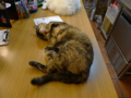 Cats of Houtong, 花皮&小白@217Cafe, #6956