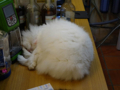 Cats of Houtong, 小白@217Cafe, #6960