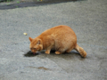 Cats of Houtong, #7316