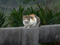 Cats of Houtong, #7317