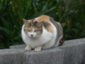 Cats of Houtong, #7318
