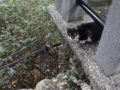 Cats of Houtong, #7320