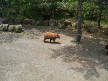 f:id:horie77:20110521114444j:image:w360