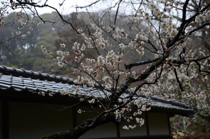 f:id:ikko_photo:20140302141421j:image