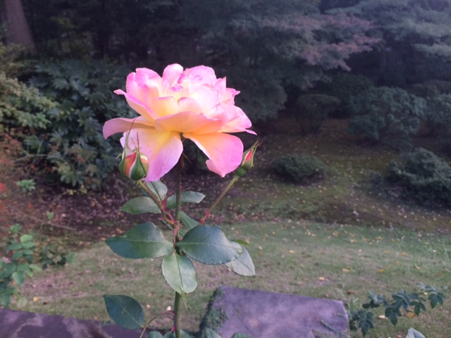 f:id:impatiens101:20141029225256j:plain