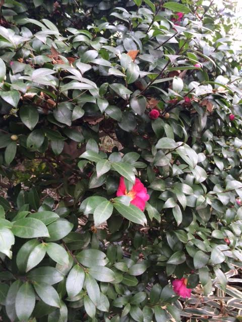 f:id:impatiens101:20141207090642j:plain
