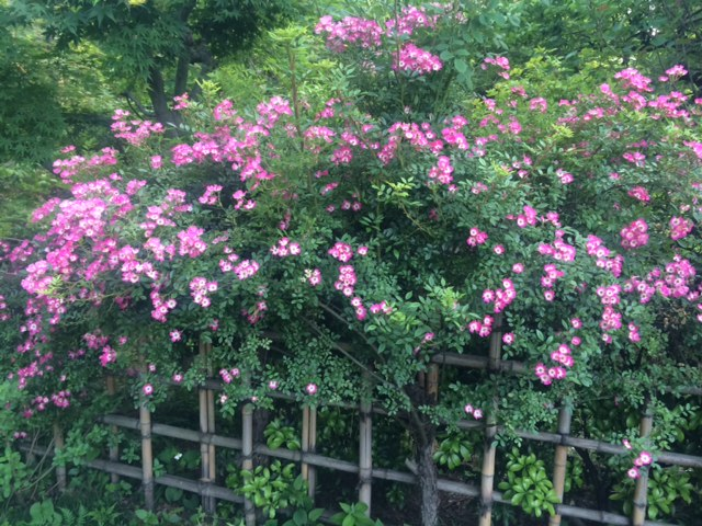 f:id:impatiens101:20150524223452j:plain