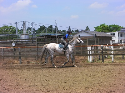 f:id:interactionhorseschool:20110604144112j:image