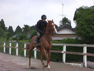 f:id:interactionhorseschool:20110610165707j:image