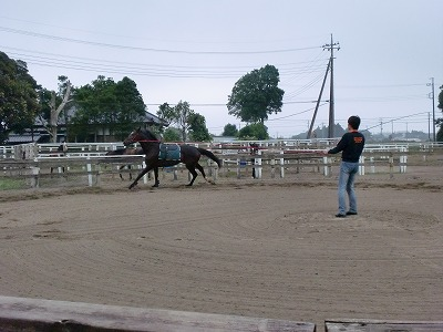 f:id:interactionhorseschool:20110627172117j:image