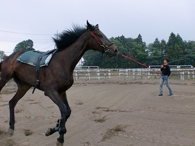 f:id:interactionhorseschool:20110627172136j:image