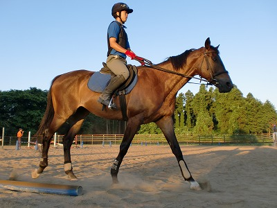 f:id:interactionhorseschool:20110715174833j:image