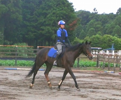 f:id:interactionhorseschool:20110722171207j:image