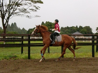 f:id:interactionhorseschool:20110729220421j:image