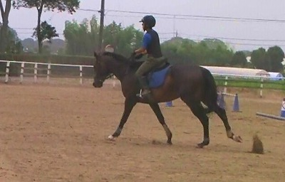 f:id:interactionhorseschool:20120724180043j:image