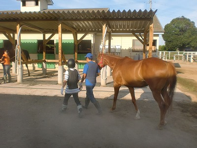 f:id:interactionhorseschool:20120730180236j:image
