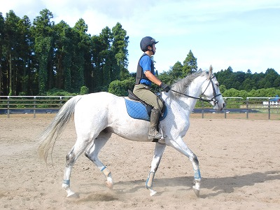 f:id:interactionhorseschool:20120912165758j:image
