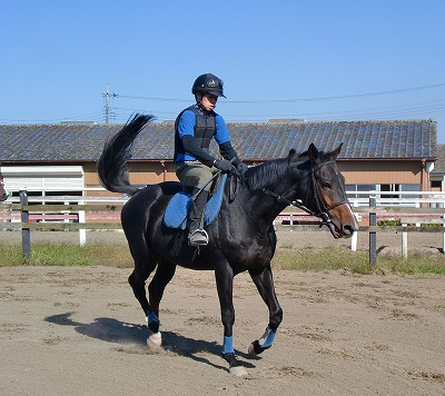 f:id:interactionhorseschool:20121016171442j:image