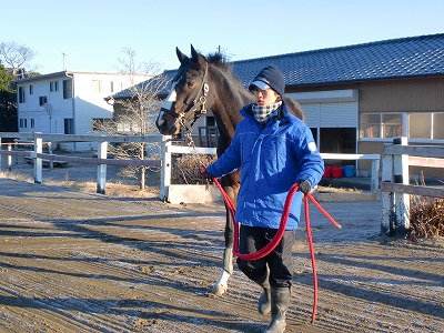 f:id:interactionhorseschool:20121212185928j:image