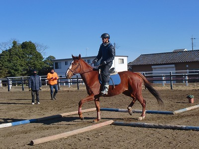f:id:interactionhorseschool:20121226180655j:image