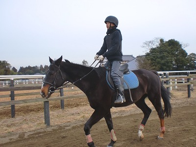 f:id:interactionhorseschool:20121228170937j:image