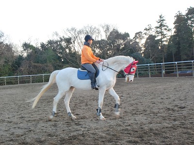f:id:interactionhorseschool:20130102173132j:image