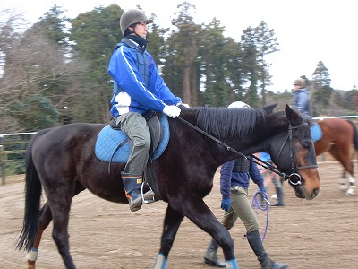 f:id:interactionhorseschool:20130105175018j:image