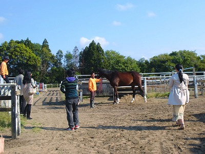 f:id:interactionhorseschool:20130504175210j:image