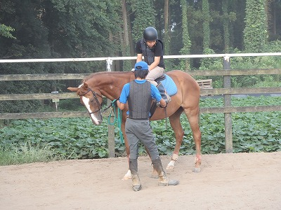 f:id:interactionhorseschool:20130814190623j:image