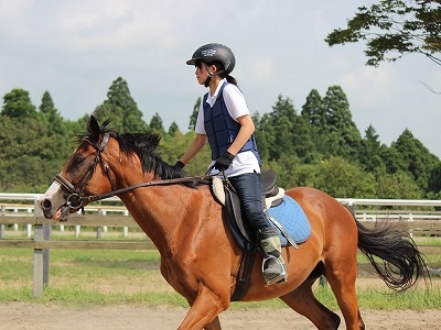 f:id:interactionhorseschool:20140731165006j:image