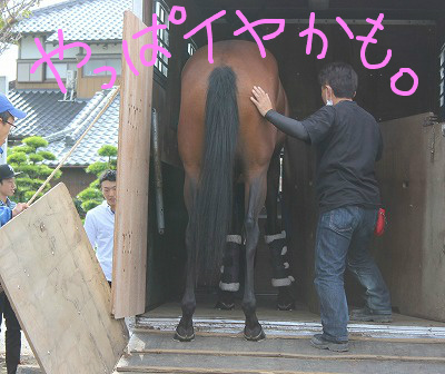 f:id:interactionhorseschool:20140913172450j:image