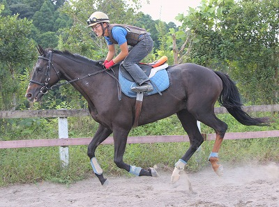 f:id:interactionhorseschool:20140916183825j:image