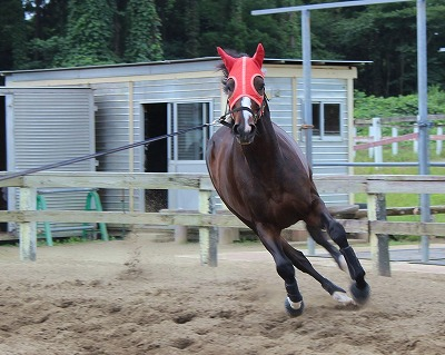 f:id:interactionhorseschool:20140918175922j:image