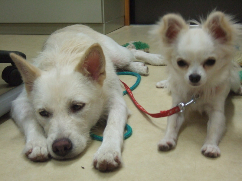f:id:japanrescue1995:20050217074856j:plain