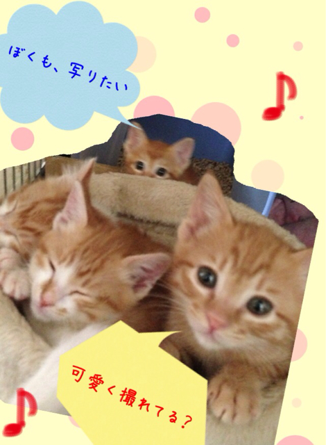 f:id:japanrescue1995:20130518134628j:plain