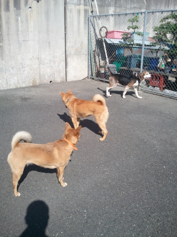 f:id:japanrescue1995:20130523154257j:plain