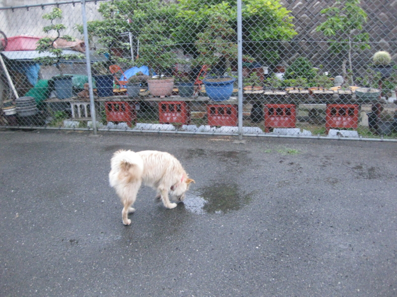 f:id:japanrescue1995:20130528184232j:plain