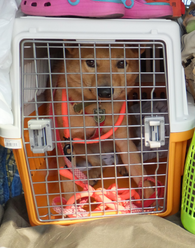 f:id:japanrescue1995:20130812082855j:plain