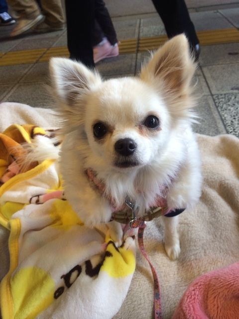 f:id:japanrescue1995:20140111190223j:plain